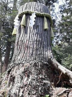 川勾神社の元のご神木?