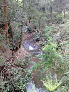 鷹取神社、林道途中の沢